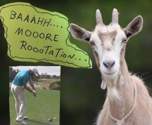 goat pleading for more rotation